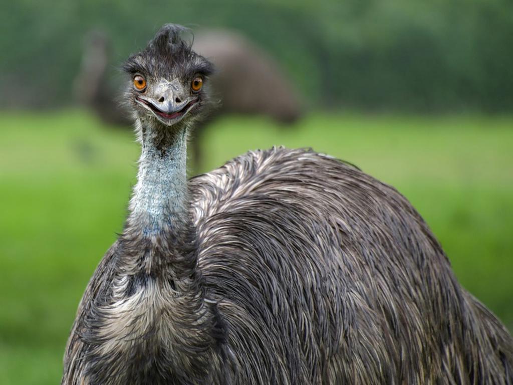 Waarom u de Emu-landbouwindustrie moet betreden